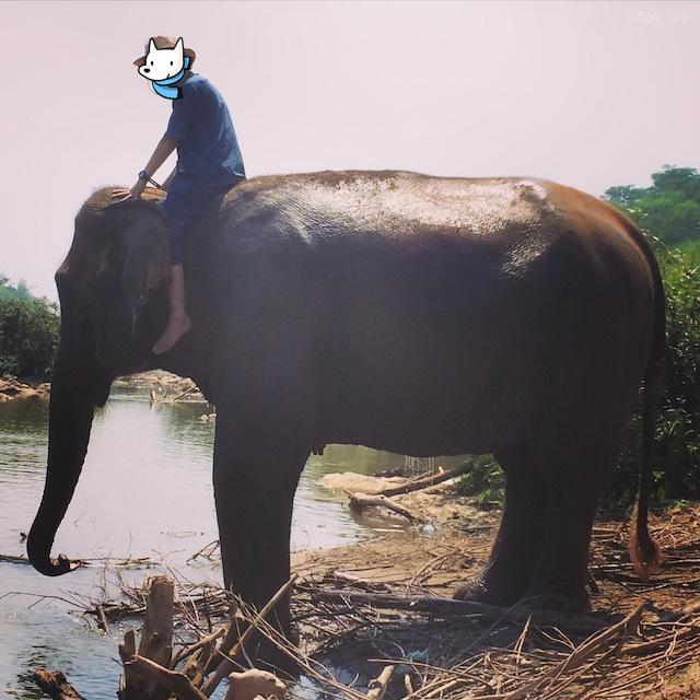 ラオス象使い資格