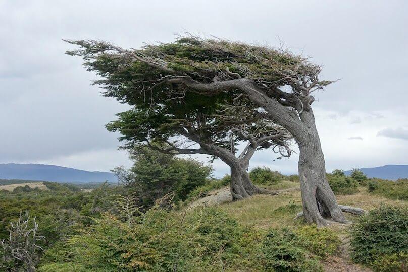 パタゴニアの風