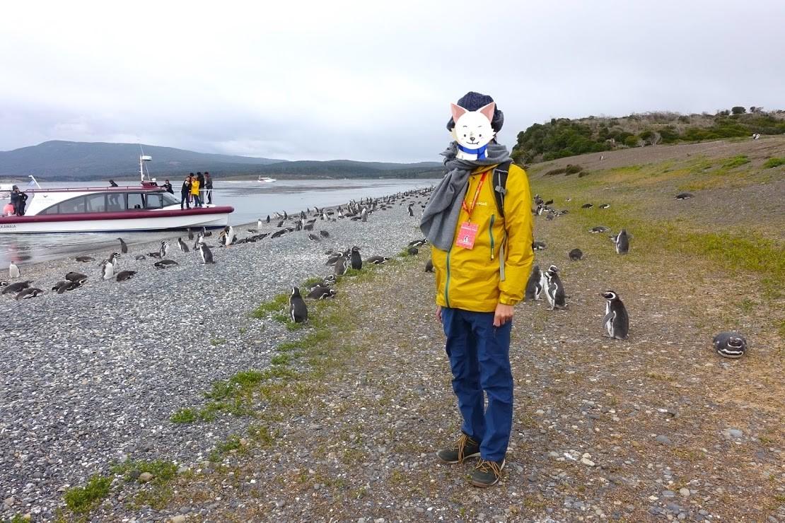 パタゴニア・ビーグル水道のペンギン