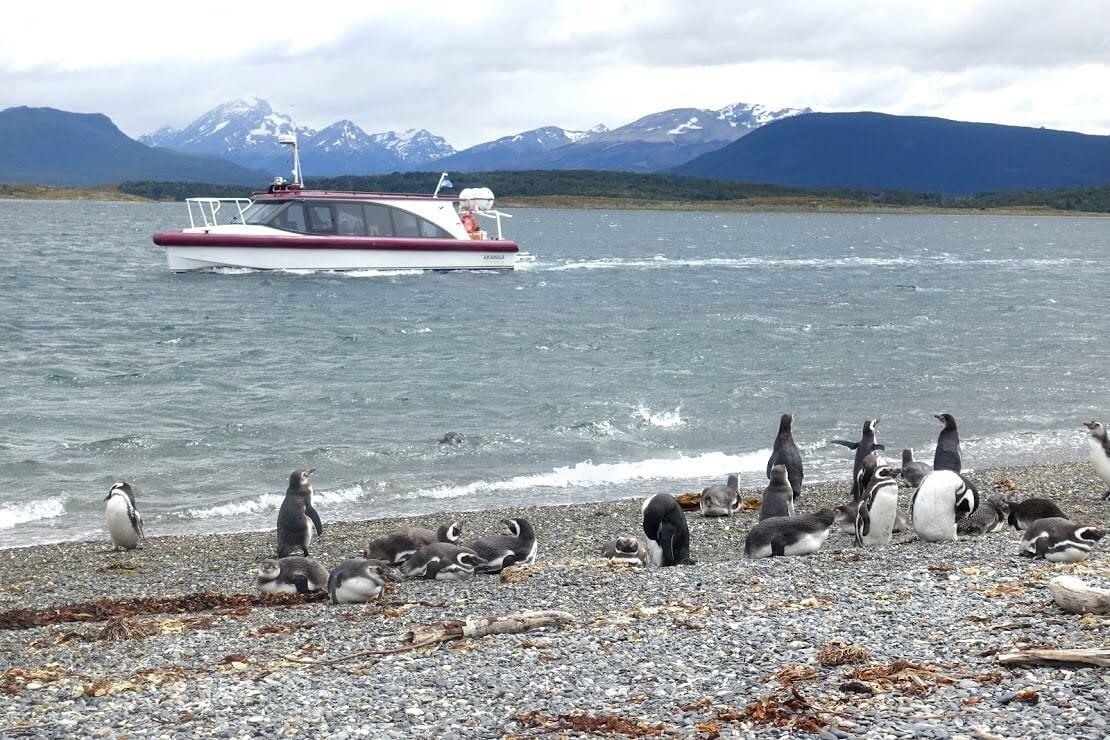 パタゴニアのペンギンツアー