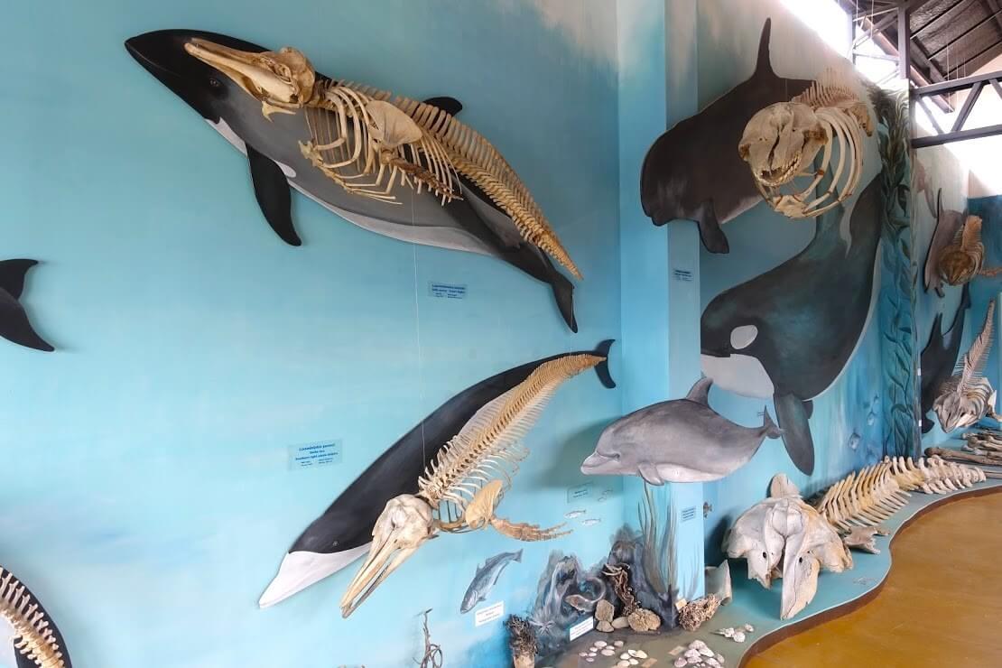 ハーバートン牧場の水族館