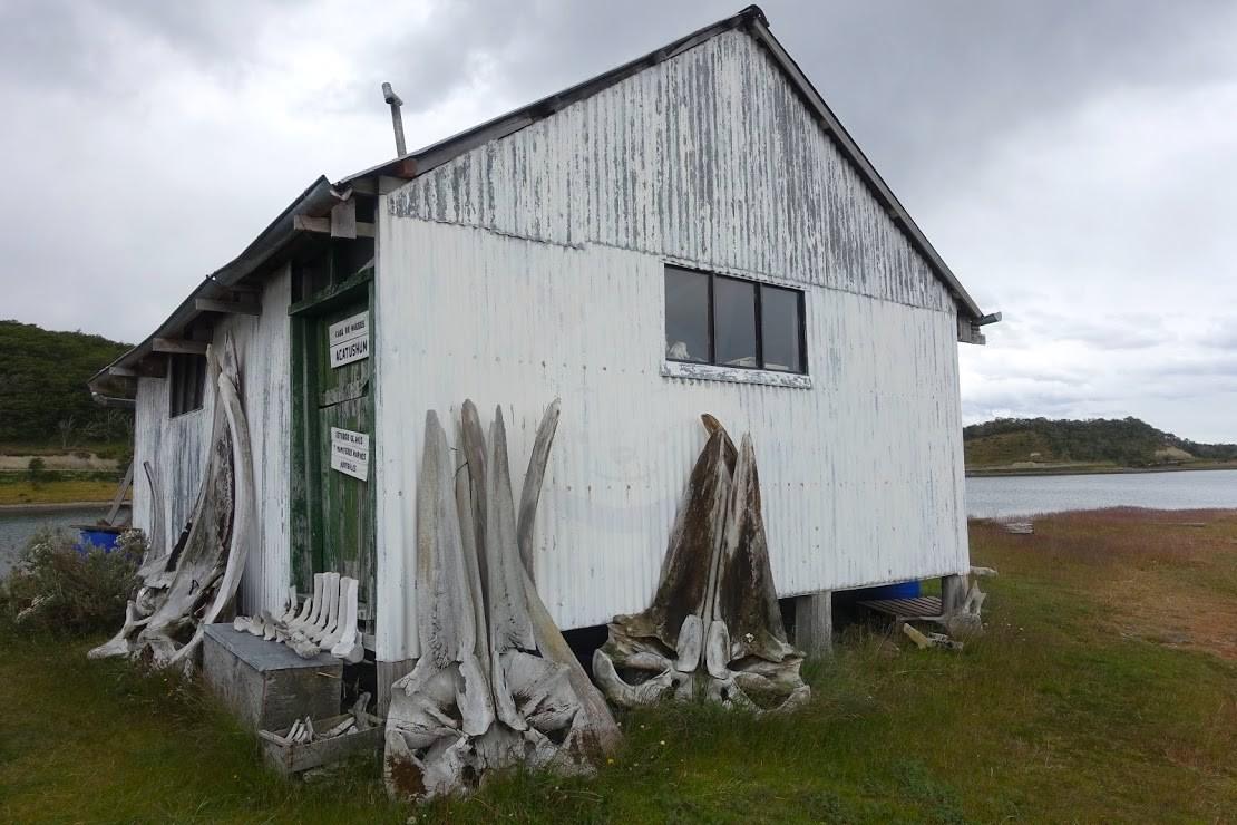 ハーバートン牧場のクジラの骨